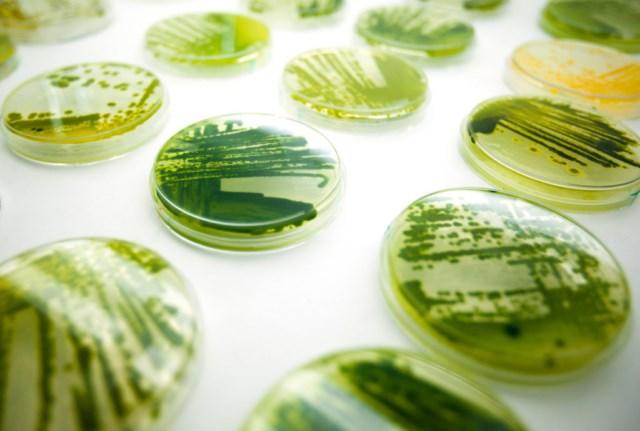 algi-w-kosmetykach