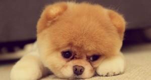 pies-najlepszy-dla-dziecka