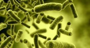 ulubione-miejsca-bakterii