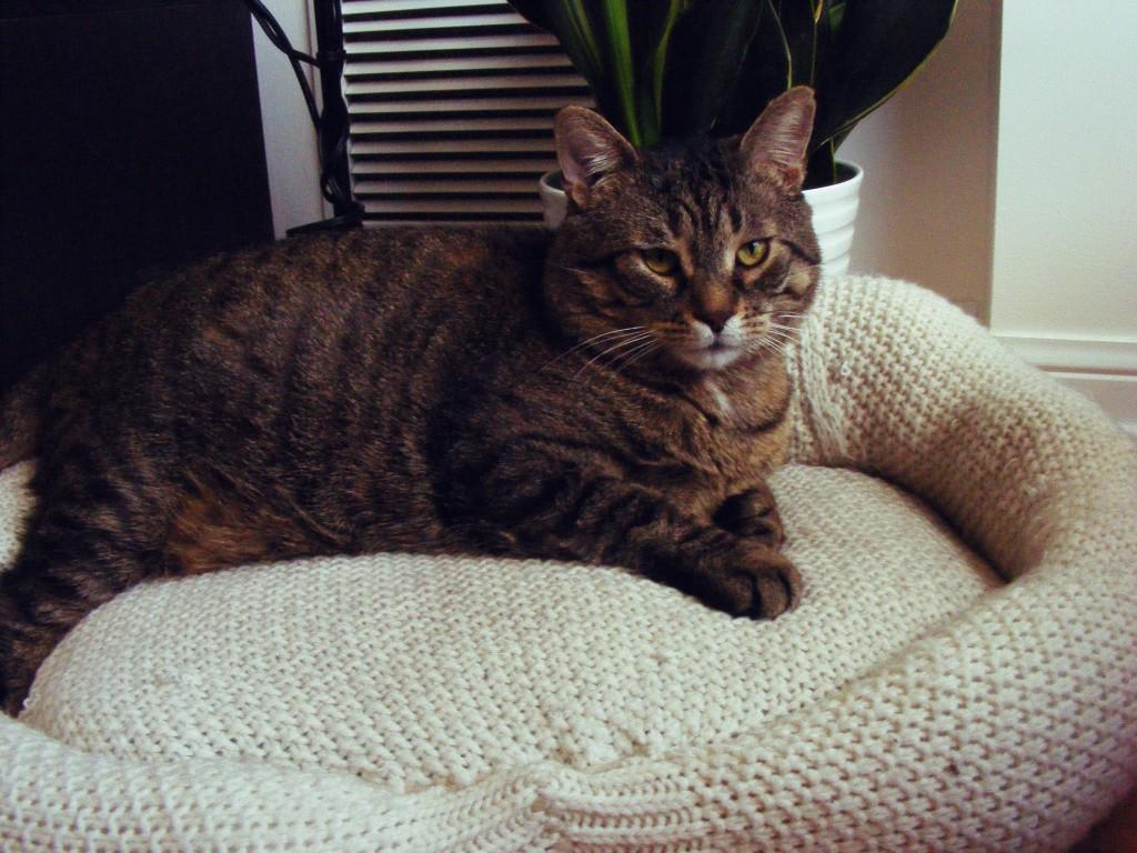 posłanie dla kota ze swetrów