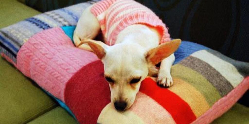 ubranko dla psa ze swetra