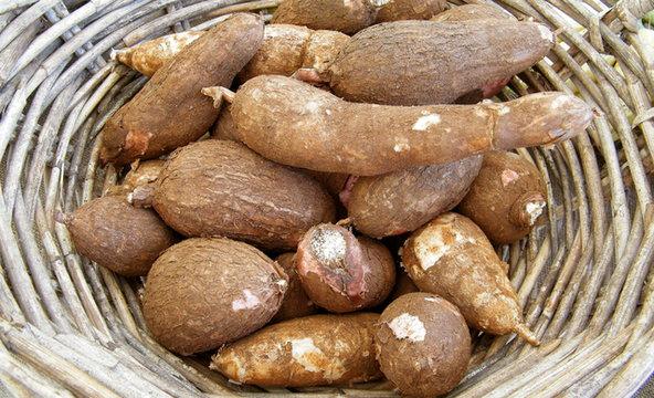 maniok-jadalny-superfood