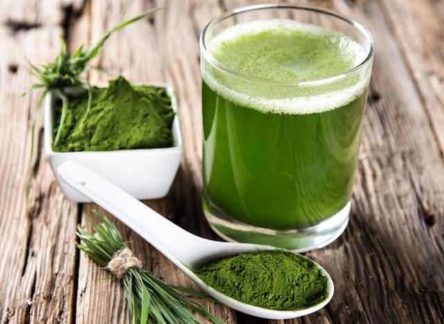 zielone-algi