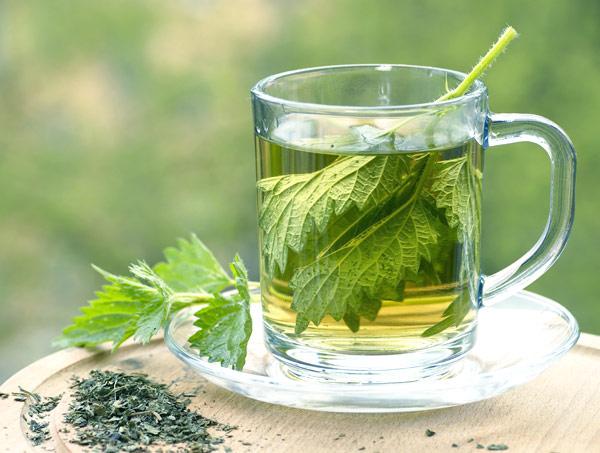 herbata-z-pokrzywy