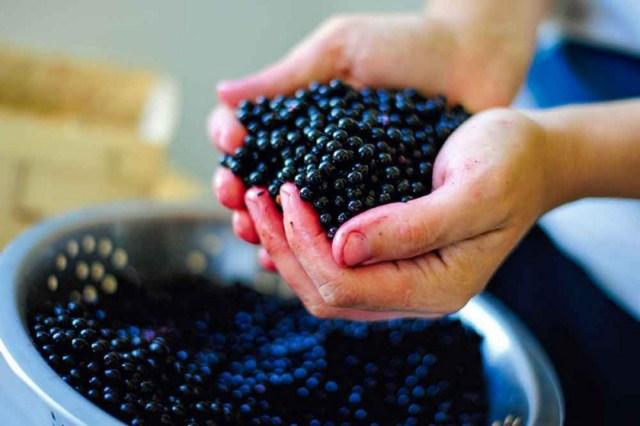 owoce-czarnego-bzu