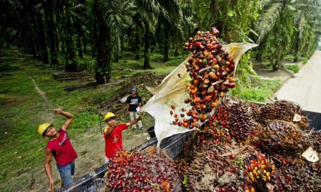 olej-palmowy-robotnicy