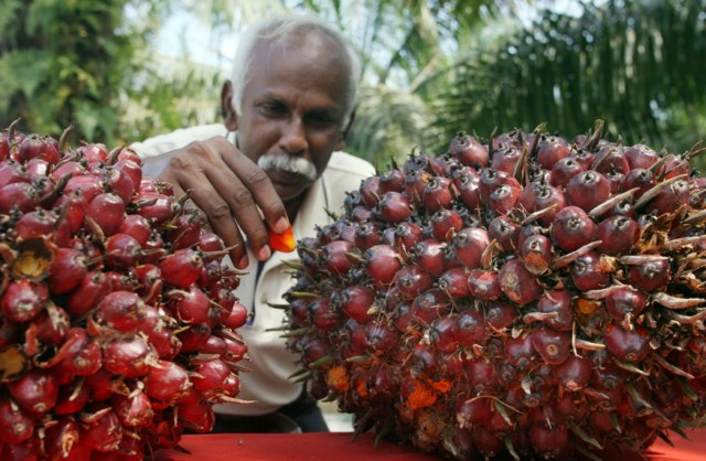 praca-przy-oleju-palmowym