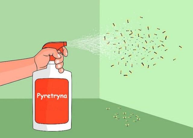 co-na-owocówki-pyretryna