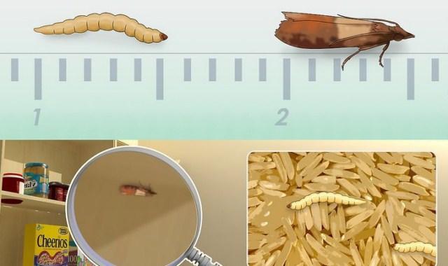 Znalezione obrazy dla zapytania mole ubraniowe gniazdo