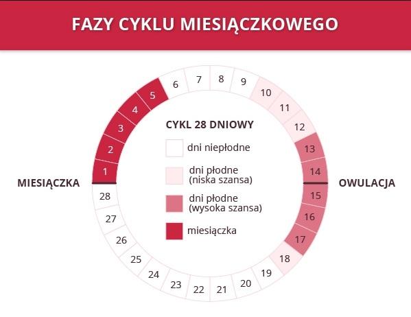 fazy-cyklu-miesiaczkowego