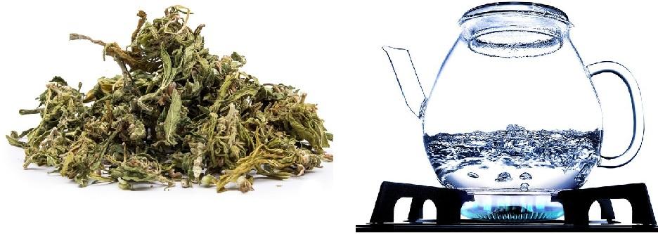 plukanka-z-zielonej-herbaty