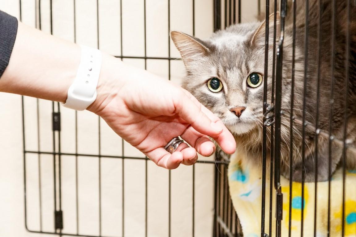 adoptowanie-kota