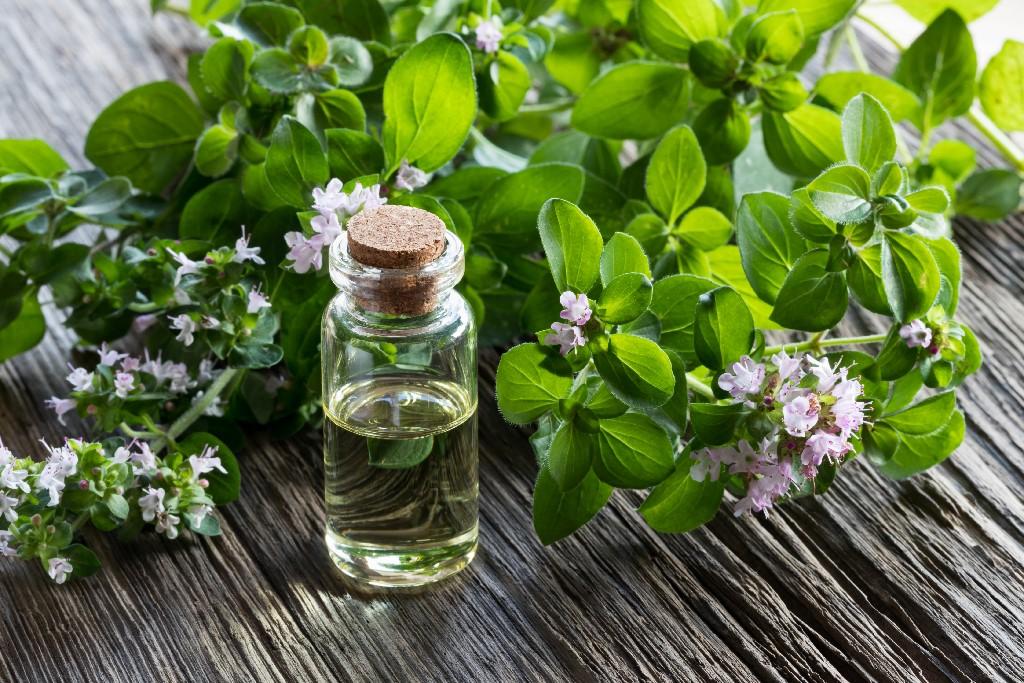 Najlepsze zioła przeciwwirusowe i wspomagające odporność